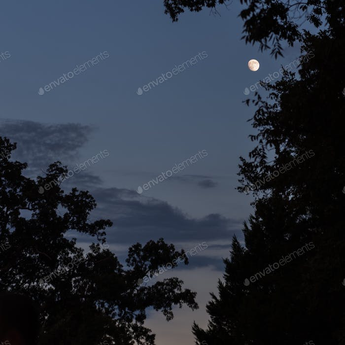 silhouette of trees at twilight with moon.