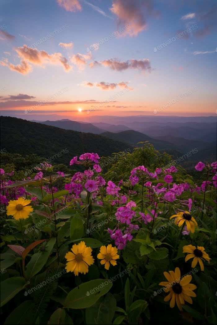Wildflowers at sunset in the mountains of North Carolina