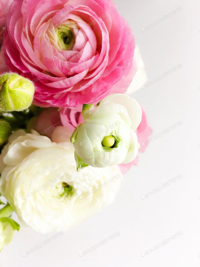 Looking down at a springtime bouquet of pink and white ranunculus flowers.