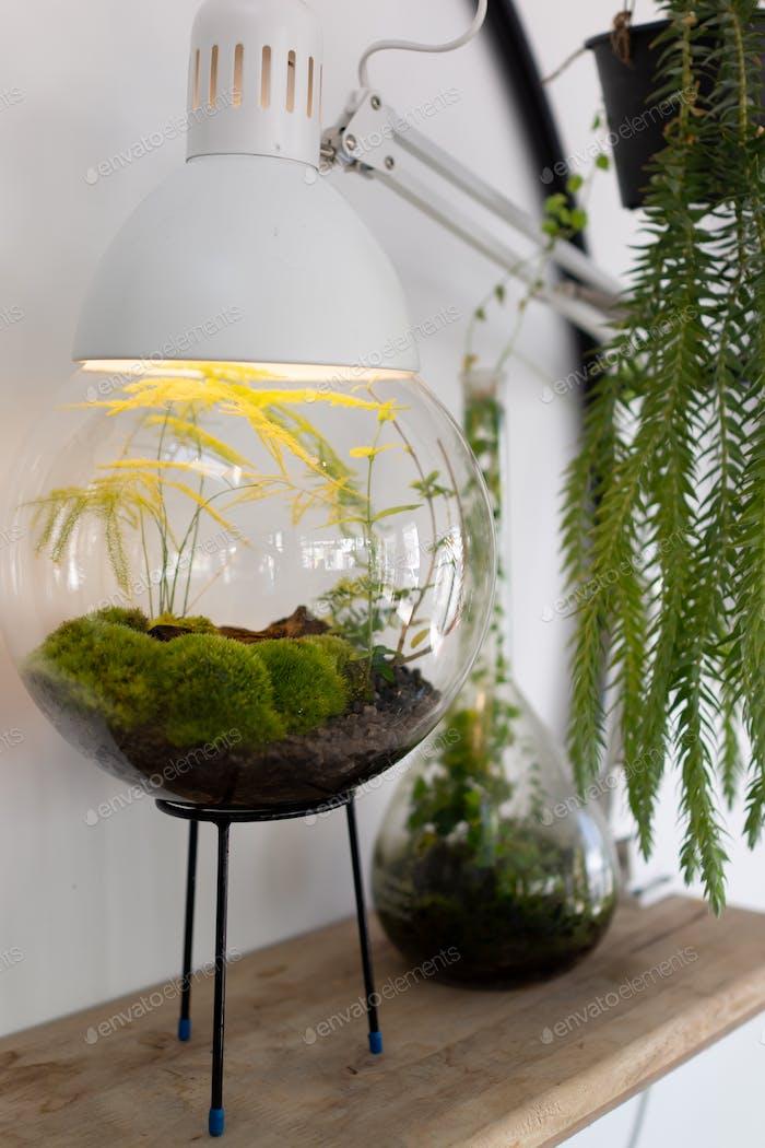 Small garden of terrarium bottle on table indoor