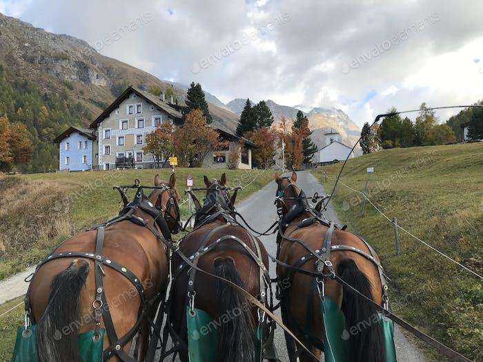 Riding a horse drawn carriage.