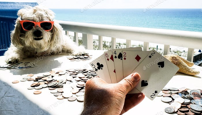 When playing cards for a pot of money in coins you must watch the poker face of the cute doggie