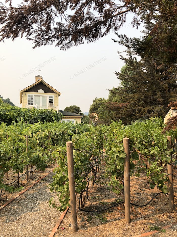 Our Airbnb house with a Winery in the backyard