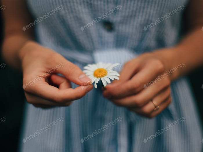 Woman's hand is holding camomile