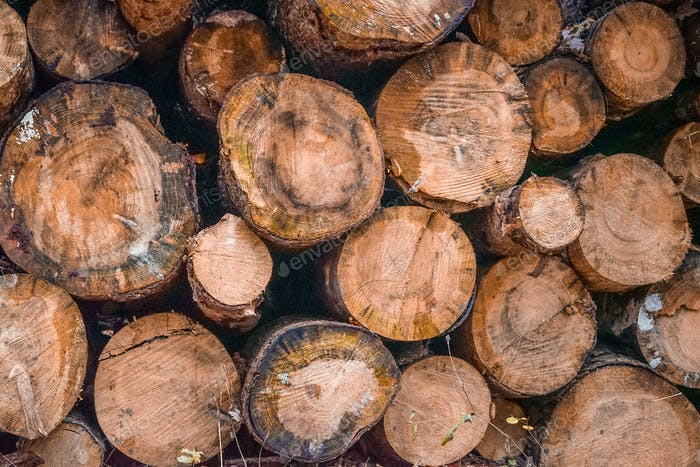 Lumber Industry,Timber,Log,Forest,Wood - Material,Woodland,Industry,Deforestation,Tree Trunk,Stack,B