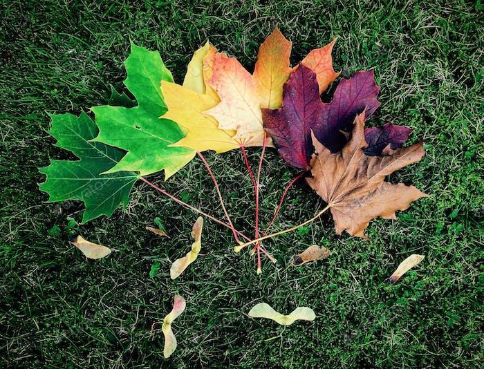 The colours of autumn/fall
