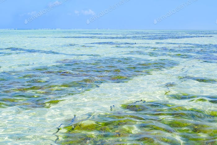 Algae plantation in Zanzibar