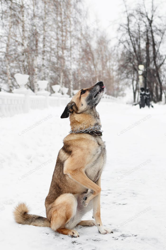 Brown and white short-haired mongrel dog on a background of a winter snowy park.