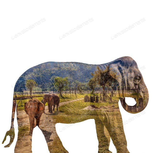 Double-exposure of Asian elephant(s) roaming an elephant nature preserve in Chiang Mai, Thailand