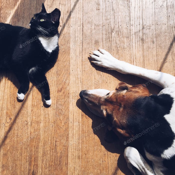 Dog & cat laying in the sun