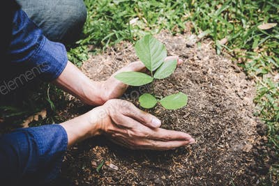 World environment day reforesting