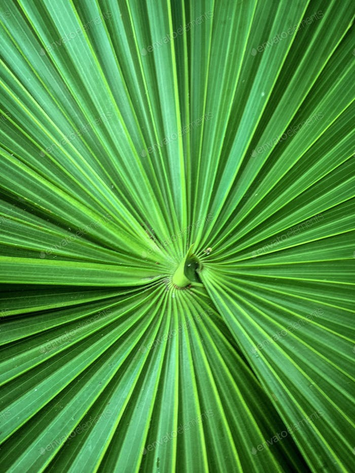Palm frond detail