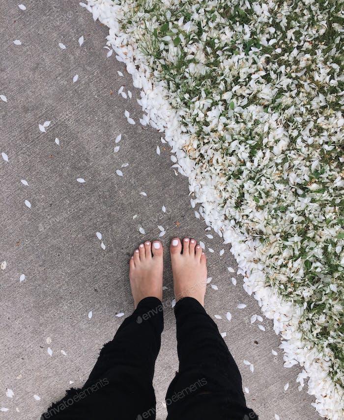 Petals everywhere