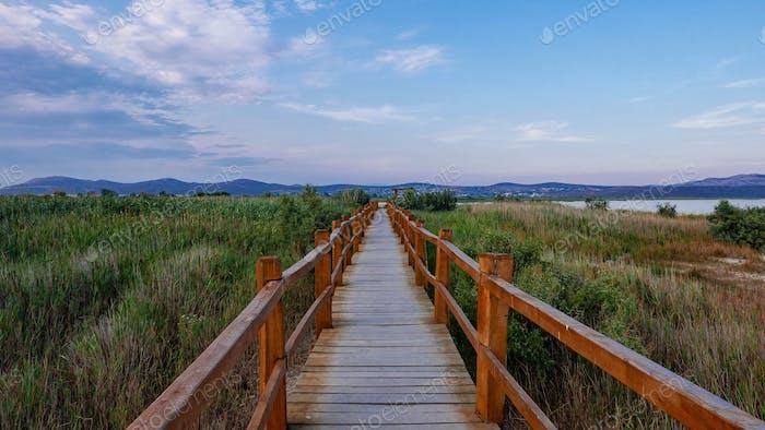 Empty boardwalk in nature park. Landscape, diminishing perspective, vanishing point.