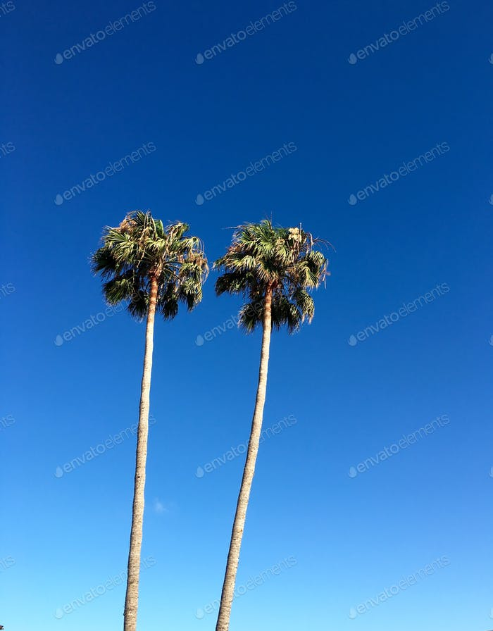 Palm trees against blue sky with room for copy