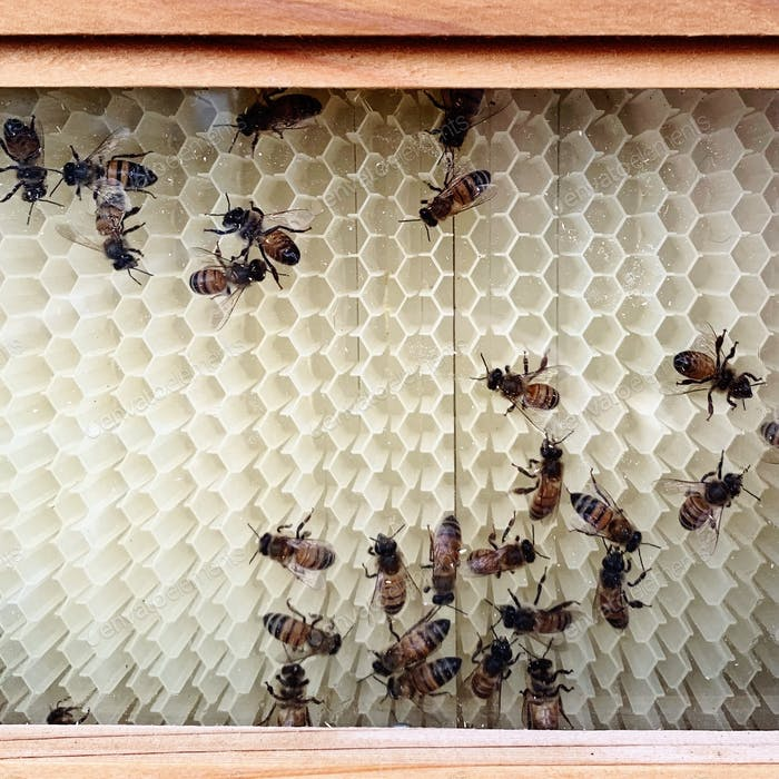 Bee Hive with bees in a honeycomb