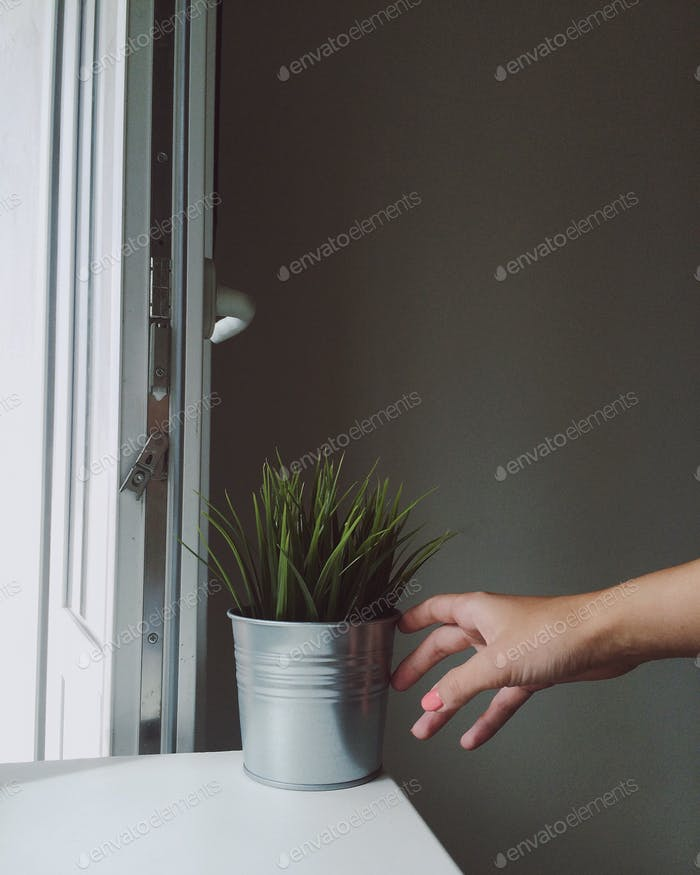 Artificial plant on the windowsill