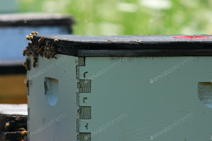 Wooden bee hive boxes in the summer sun