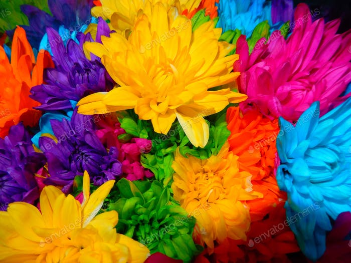 Bright and Colorful Mums