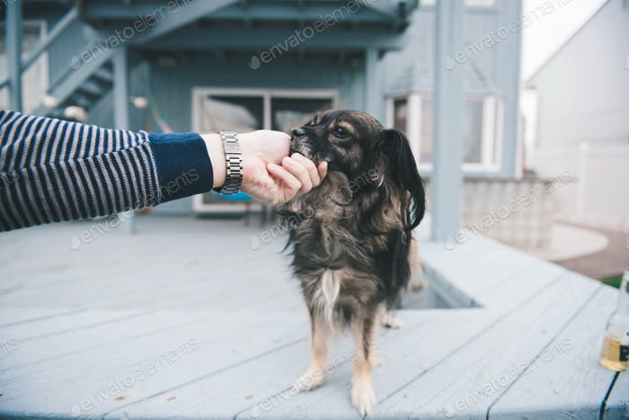 Guy petting dog