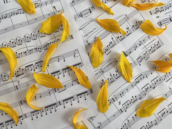 Sheet music with yellow flower petals