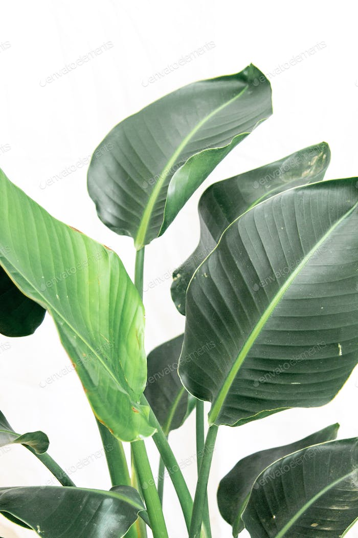 Green tropical plant