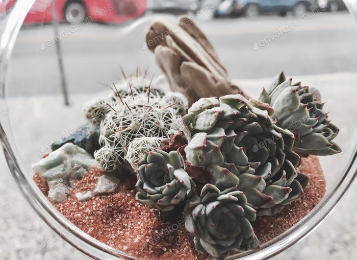 Very cool glass terrarium with succulents.
