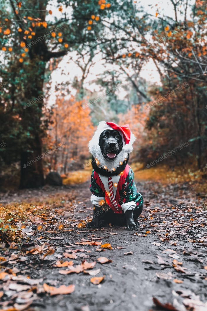 Xmas doggy 🐶