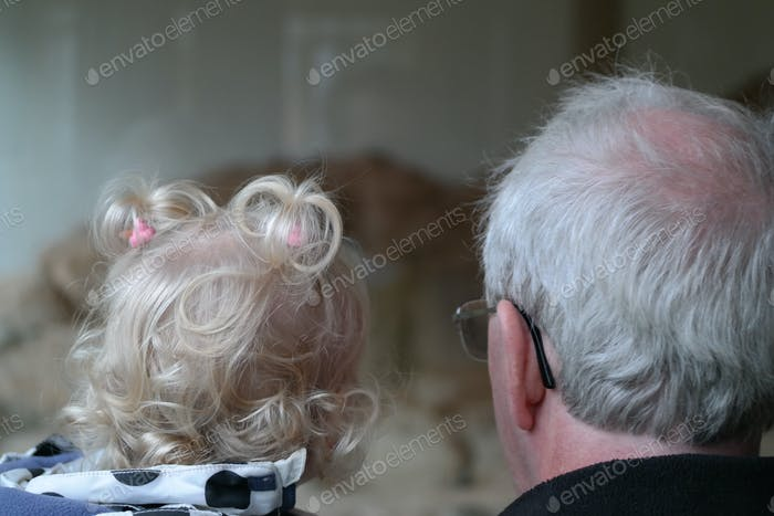 Grandfather and grandchild in the zoo