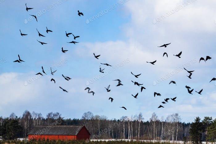 Flock of doves in the sky