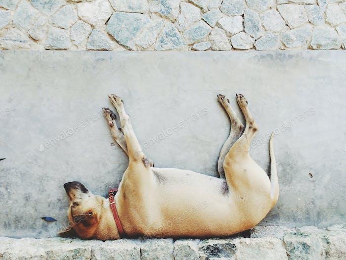 Upset dog on the ground
