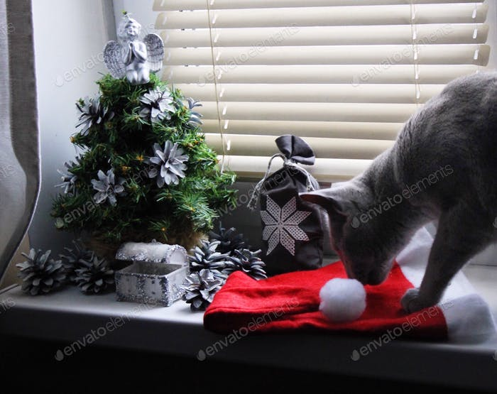 Christmas decoration and cat 😻🎅