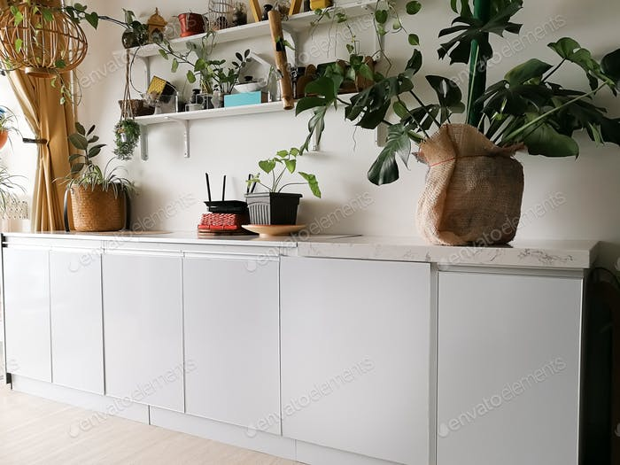 White cabinet with houseplants in room. Home decor and tree lover concept