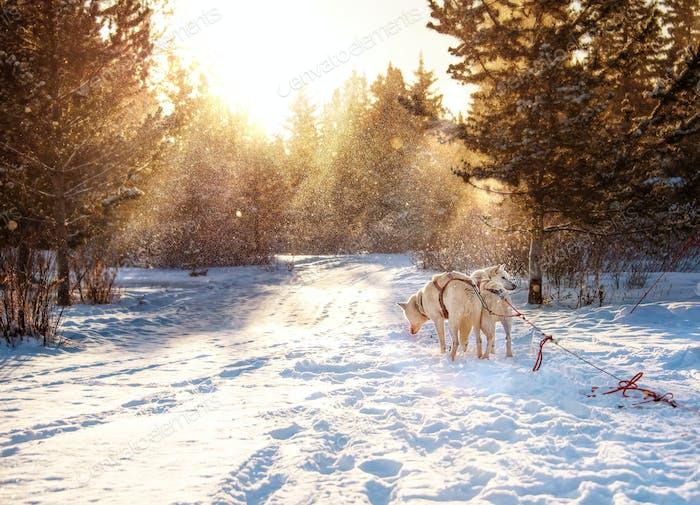 Sunrise in Yukon