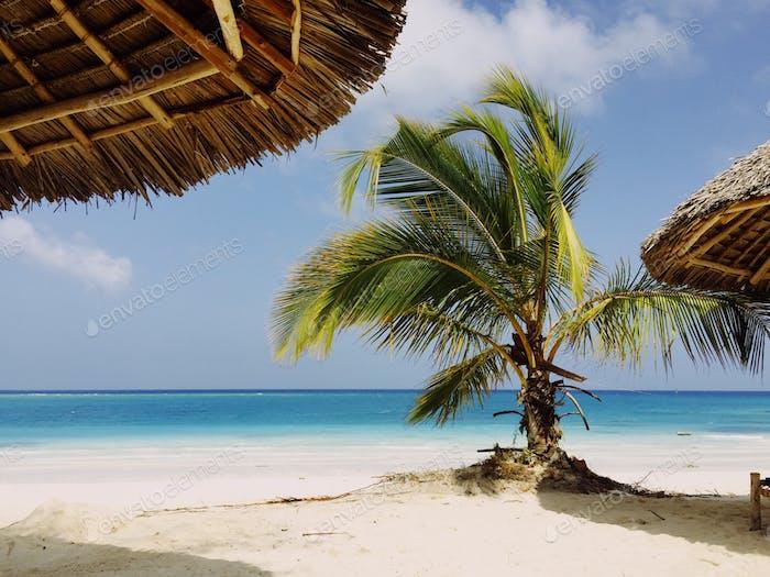 Zanzibar. Beech and palm.