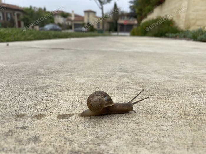 A slimy snail moves slowly and leaves a trail or tracks  on the sidewalk in the neighborhood