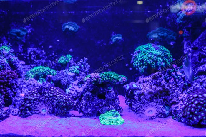 Neon organisms in Lyon Aquarium. Underwater photo