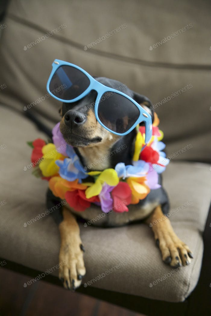 Just a casual dog celebrating Aloha Friday with sunglasses and a lei