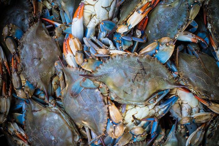 sea food chaos
