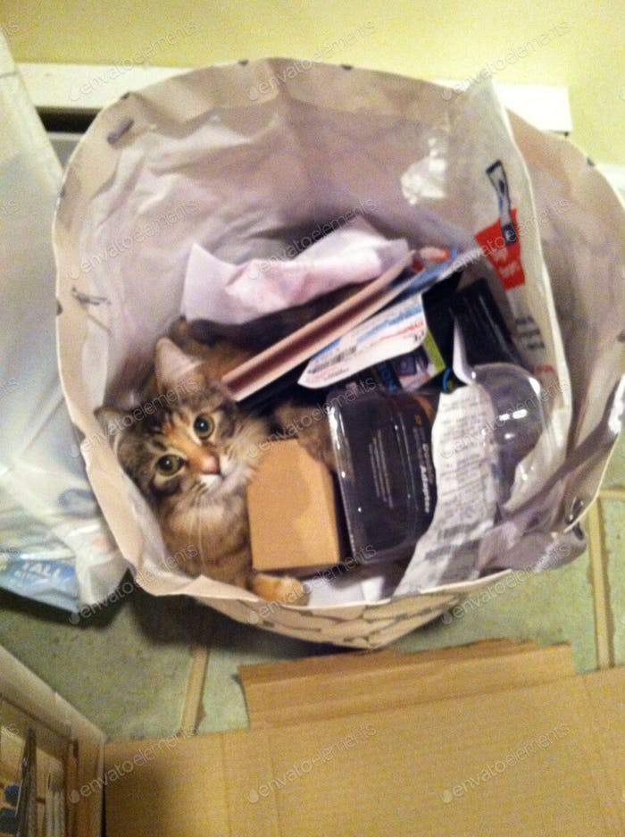 Kitty playing in the trash...