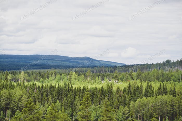 Forest and mountain