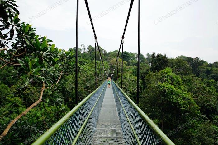 Beautiful Tree Top Walk in MacRitchie Reservoir Park, Singapore