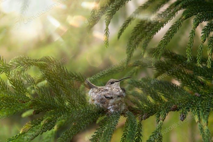 Tiny bird in a palm-sized nest.