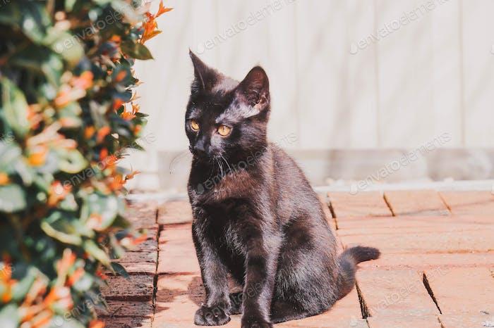 Kitty in the sunshine