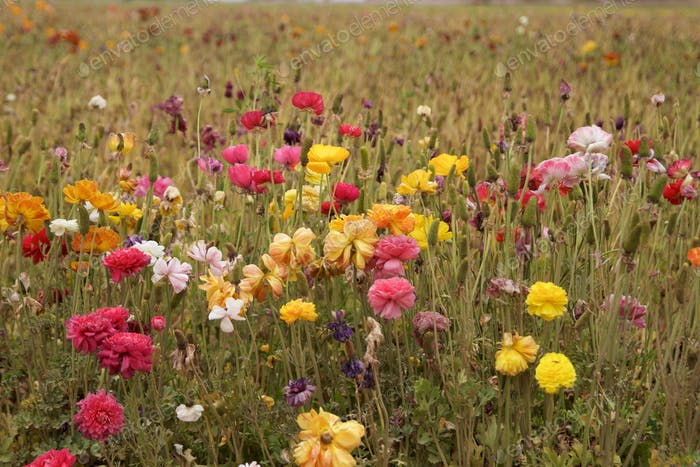 Bright and colorful Flowers in dying flower field