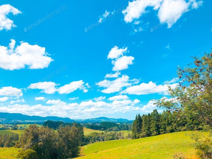 Beautiful New Zealand nature