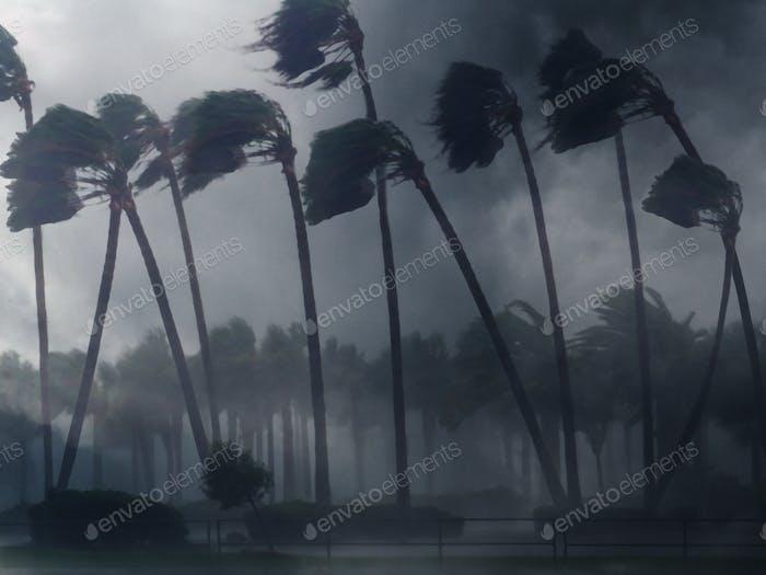 Palm Trees - WIND