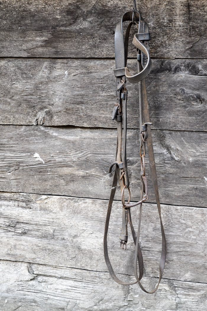 Horse bridle hanging on a wall