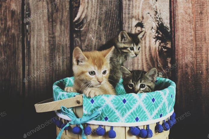 Kätzchen in einem Korb vor Holzkulisse.
