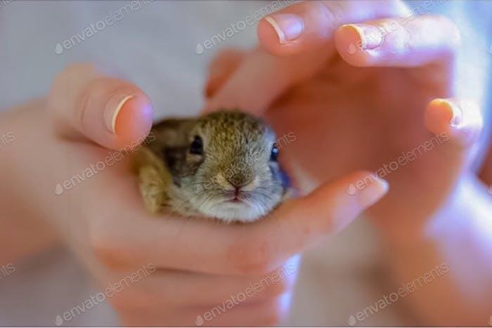 A Tiny Tot of A Bunny